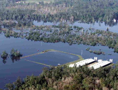 Granjas industriales y huracanes: el caso de Florence